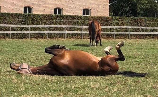 Waarom wordt mijn paard verdoofd?