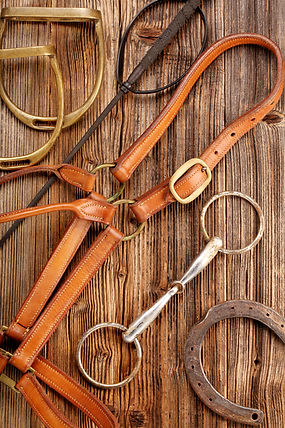 Set of horse equipment on wooden backgro