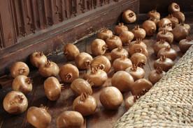 49 Pomegranates