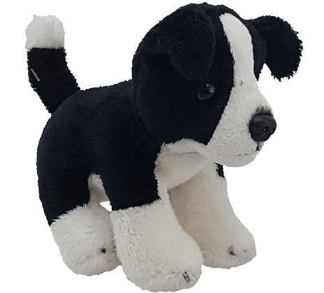 Mac the Mini Dog
