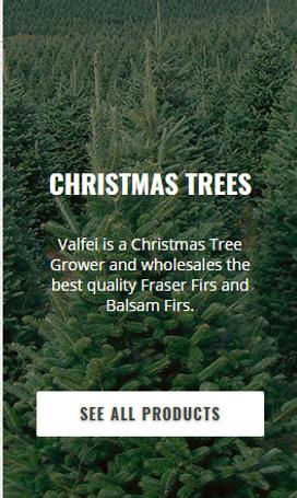 Chistmas Trees