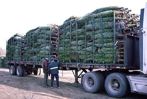delivering Christmas Trees