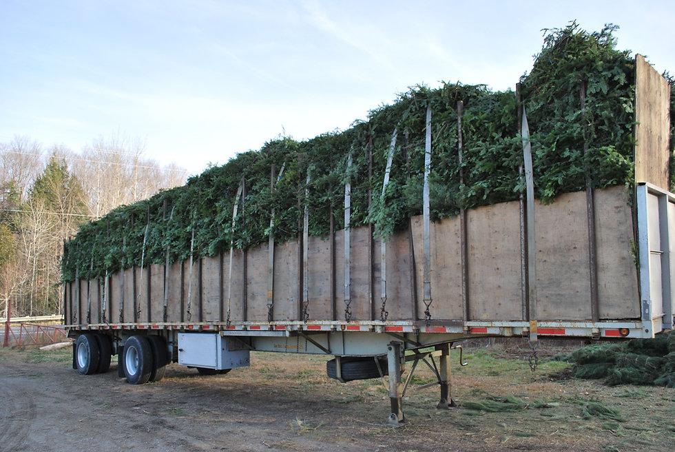 A truck load full of Fraser fir brush bundles