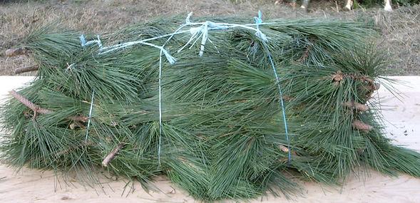 red pine bundle