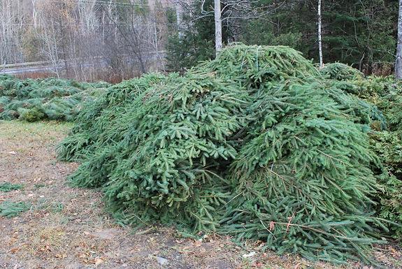 many spruce brush bundles