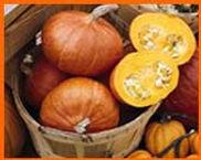 ambercup pumpkins