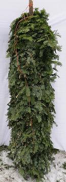 balsam fir on a stick