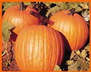 Howden Pumpkins