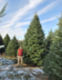 A big Balsam Fir Christmas Tree with Antoine Plouffe