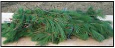 brances de pin blanc