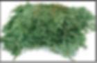 branches de baumier