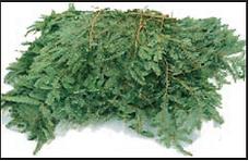balsam fir brush and branches