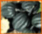 sweet white acorn squash