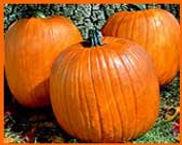 Howden Biggy Pumpkins