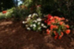 paillis de cèdre brun avec des fleurs