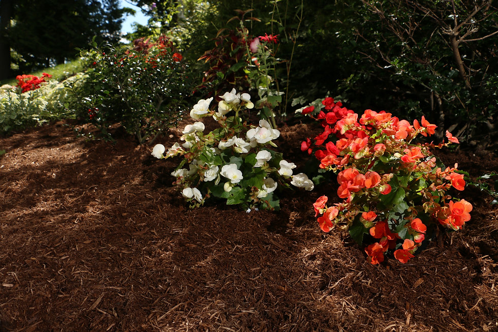 Valfei Brown Cedar Mulch in flower bed