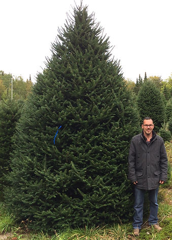 A big Fraser Fir Chrismas Tree with Yvan Marchesseault