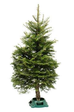 Balsam Fir Table Top Christmas Tree