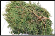branches de cèdres