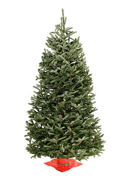 Fraser Fir #2 Grade Christmas Tree
