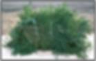 Branches D`ÉPINETTE