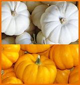 mini-white and mini-orange pumpkins