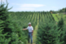 Shearing Fraser Fir Christmas Trees