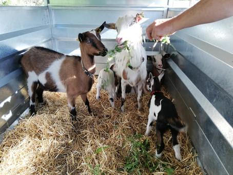 Wieder Neuigkeiten von der Vielfalt Farm...