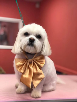 Bella Dog Groom