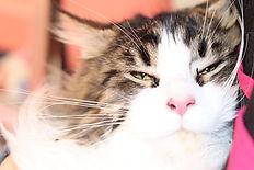 Cat Martha.jpg