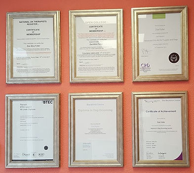 Dog Grooming Certificate 2