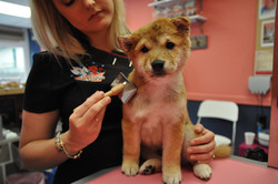 Dexter Puppy Groom