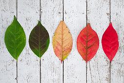 feuilles transition.jpg