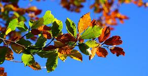 Perspectives d'automne...