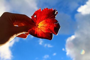 maple-leaf-4950411_1920.jpg