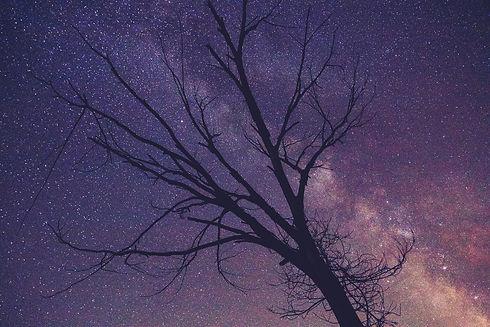 tree-2606216_1920.jpg