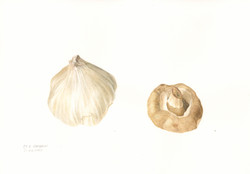 Garlic and mushroom