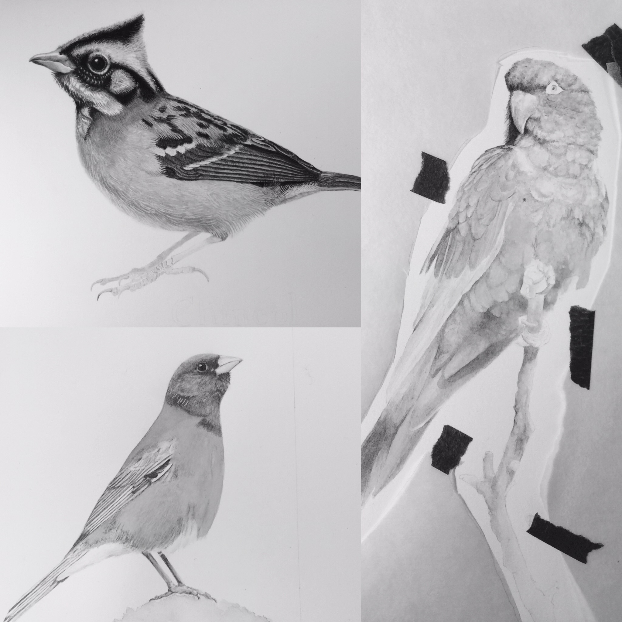 Birds Illustration workshops