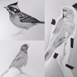 Birds Illustration workshops