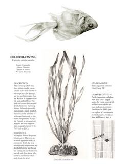 Dead fish info