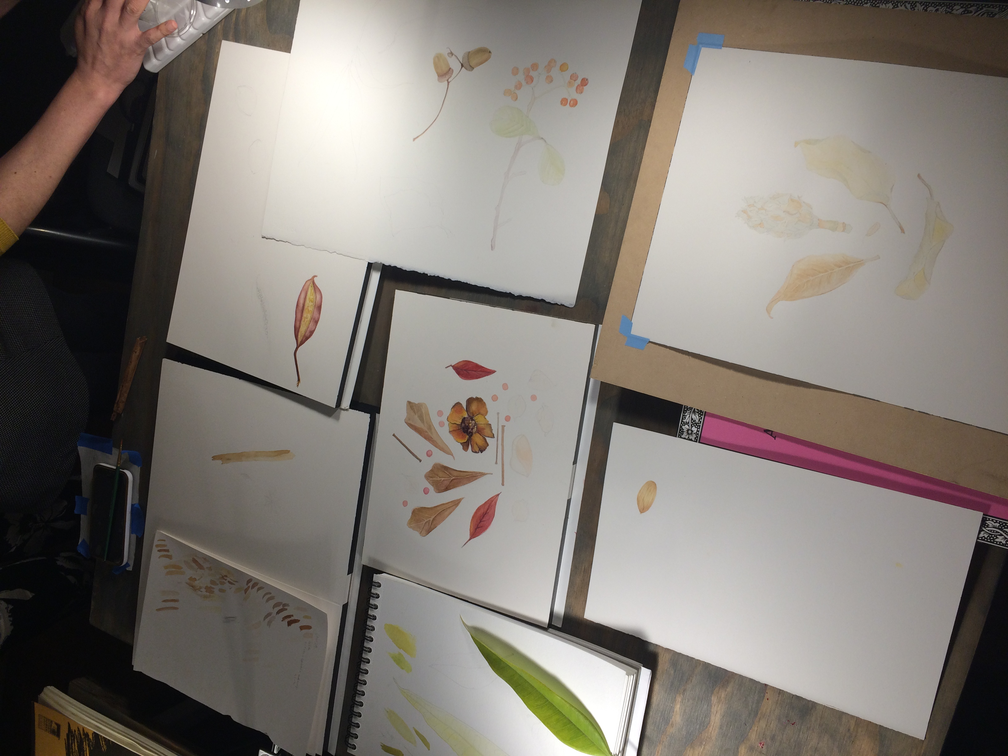Botanical Illustration workshops