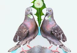 Street doves detail