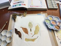 Botanical Illustration workshops