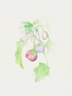 Eggplant composition.