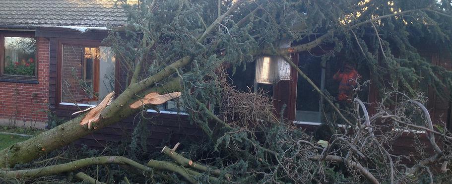Træ vældet i storm
