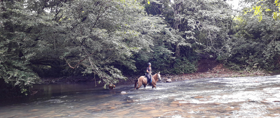 Surefooted horses take you through the rivers.
