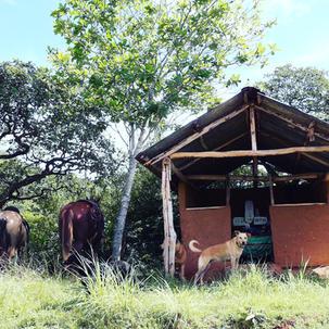 Mud hut church found on trail_