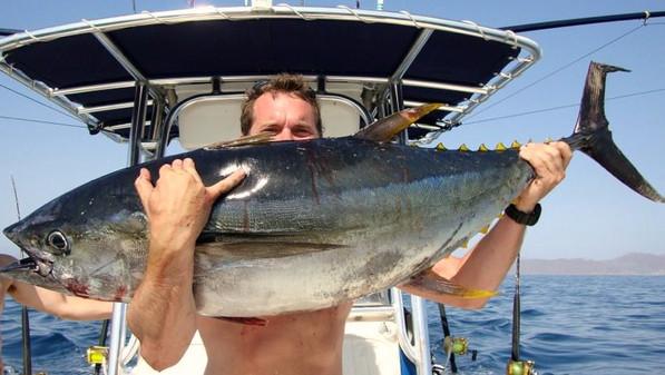 Fish Panama