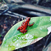 Cool find down at the coast! _#redfrog #
