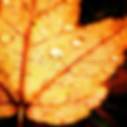 Button Novembre 4.jpg
